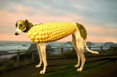 """Corndog from """"The Pun Also Rises..."""" by John Pollack via the WSJ #Corndog  #John_Pollack  #WSJ"""