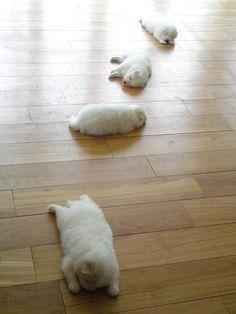 Nap Time!! too cute