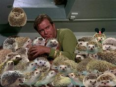 "Fact: ""The Trouble With Hedgehog Facts"" is nine out of ten hedgehogs' favorite Star Trek episode. The rest prefer ""The City on the Edge of Forever. Hedgehog Facts, Hedgehog Care, Cute Hedgehog, Happy Hedgehog, Baby Animals, Funny Animals, Cute Animals, Star Trek Episodes, Funny Cute"