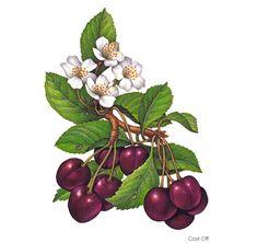 фрукты, ягоды - Лада - Picasa Web Albums