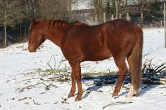 Get tips to keep an arthritic #horse comfortable and #healthy during #winter!