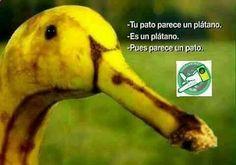 Imagenes de Humor #memes #chistes #chistesmalos #imagenesgraciosas #humor www.megamemeces.c... ➧➧ www.diverint.com/...
