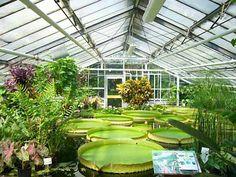 greenhouse | Encyclopedia Britannica