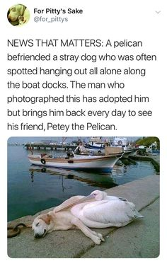 35 Great Pics and Memes to Make You Chuckle - Sweet Pets - Animals Cute Little Animals, Cute Funny Animals, Funny Cute, Cute Puppies, Cute Dogs, Cute Babies, I Love Dogs, Funny Animal Memes, Funny Dogs