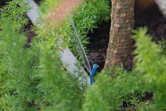 Você adora plantas, mas sempre esquece de regá-las? Aprenda a fazer um gotejador para irrigar o jardim ou os vasos, que permite o controle do volume de água...