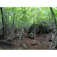 【08zerohachi08】さんのInstagramをピンしています。 《. . 行かなきゃ、由布岳② (2016.08.13) . . 正面登山口から登ると、 鹿ちゃんに出会える森。 暑すぎるのか、いなーい。 . . #山#日本#九州#大分#由布岳#湯布院#登山#山登り#トレッキング#ハイキング#景色#風景#緑#空#ソラ#森#顔面汗ドロ事件発生 #japan#kyusyu#oita#trekking#hiking#hike#view#green#sky#mountain#woods》