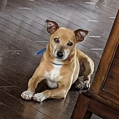 Foster To Adopt, Finding Your Soulmate, Miniature Pinscher, Animal Welfare, Beautiful Soul, Animal Shelter, Beautiful Creatures, Pet Adoption, Tennessee