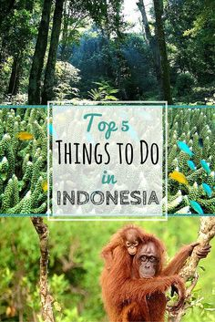 We wanted to move beyond the well-trod Bali/Java path and showcase some of the country's best ecotourism attractions, from Sumatra to West Papua. These are a few of our favorite things to do in Indonesia.