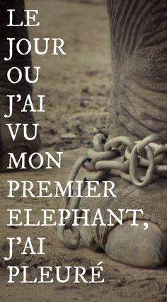 The Path She Took   Le jour où j'ai vu mon premier éléphant, j'ai pleuré   http://www.thepathshetook.com