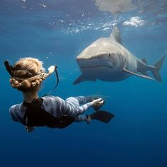 """ backing up to give this tiger shark some personal space. It is so important to never turn around and swim away from a shark… Shark Pictures, Underwater Pictures, Funny Pictures, Surf, Shark S, Foto Instagram, Great White Shark, Underwater World, Underwater Photography"