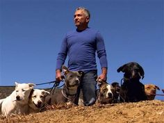 Bitten by tragedy, Cesar Millan returns wiser as 'Leader of the Pack' - Rock Center with Brian Williams/  Jun 12, 2013