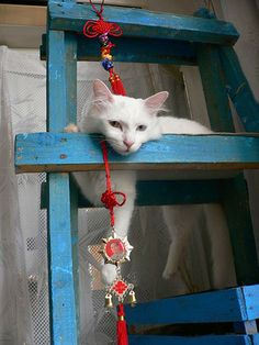 Creative Cat Tree-love this cat!  My white kitty would love this too.