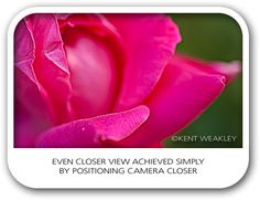 How to photograph flowers close-up in 5 steps