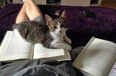 Clever guy. Using 2 books: One for the cat to lay on and one for the actual reading.
