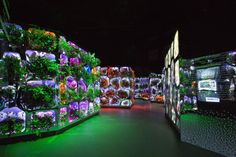 Image result for Dubai's Museum of the Future Opens Exhibit About Climate Change Solutions