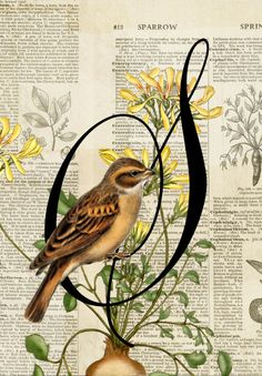 Vintage Sparrow - Digital Scrapbooking Ideas - DesignerDigitals #scrapbook #sparrow #nature