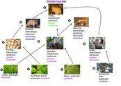 20 ideas para usar thinglink en el aula | Utlizar y organizar los recursos para una webquest