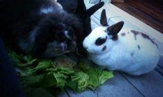 Kaninchenfan Lucky - Mein Kaninchenloch: Good morning salad ♡