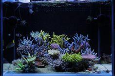 Dakkang's spectacular reef from Korea