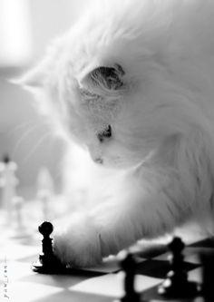 White kitty, smart kitty.....
