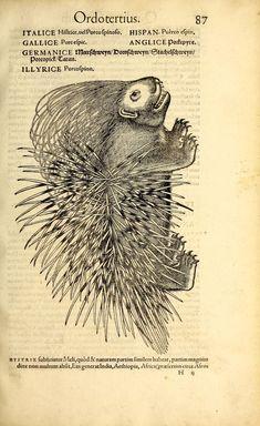 Icones animalium quadrupedum uiuiparorum et ouiparorum | Smithsonian Libraries