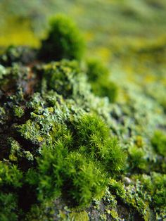I like this moss photo. I am collecting mosses from a variety of locations to start my own moss garden.