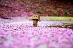 Danbo And Dandelion Wallpaper