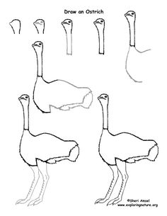 How to draw an Ostrich Easy Animal Drawings, Easy Drawings Sketches, Bird Drawings, Doodle Drawings, Disney Drawings, Drawing Birds, Doodle Art, Drawing Lessons, Art Lessons