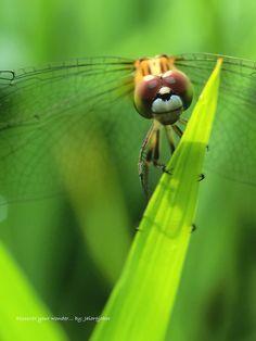 happy bug...I love this!