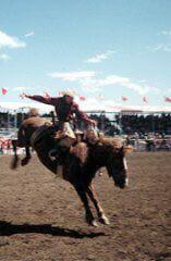 Calgary Visitor Tips Bragg Creek, Trans Canada Highway, Alberta Travel, Calgary, History, Tips, Historia, Counseling