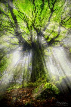 LEGEND - Broceliande et sa magie ...l'esprit de la Bretagne et ses légendes se cachent derrière chaque arbre !!  Philippe MANGUIN - photosdebretagne.com