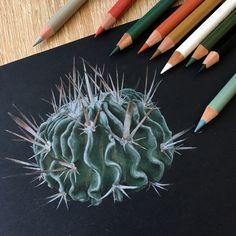 Кактус/Cactus  Иллюстрация цветными карандашами на черной бумаге Colored pencils illustration on black paper