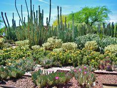 Clic para ampliar Desert Botanical Garden Phoenix, Birmingham Botanical Gardens, Myrtle Tree, Arizona Cactus, Denver Botanic Gardens, Shade House, Dry Garden, Desert Life, Types Of Plants