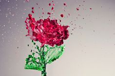 A Splash of Rose, A Stunning Liquid Rose Shot with Food Coloring High Speed Photography, Digital Photography School, Amazing Photography, Art Photography, Splash Photography, Movement Photography, Photography Gallery, People Photography, Creative Photography