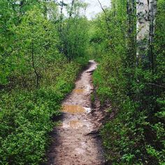 Two roads diverged in a wood and I  I took the one less traveled by And that has made all the difference.  #robertfrost #robertfrostpoem  #travel #explore #discover #onlyinmn #travels #traveller #wanderer #wanderlust #gooseberryfalls #minnesota #duluth #duluthmn #hike #explorer #neverstopexploring #familytime #gooseberry #mnstateparks #mnstate by haleykato