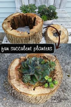 How to use old rotted pieces of tree trunk to make easy diy succulent planters. Sheet moss is the secret ingredient to make it all come together. How to use old rotted pieces Creative DIY Planters - Rotted Tree Trunk Succulent Planters - Best Do It Yourse Succulent Planter Diy, Garden Planters, Succulents Garden, Garden Art, Planter Ideas, Succulent Tree, Outdoor Planters, Succulent Outdoor, Succulent Ideas