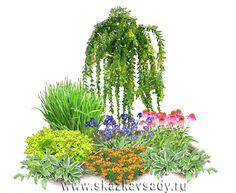 композиции из древесных растений угловые - Поиск в Google