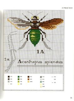 Gallery.ru / Photo # 53 - MARABOUT Insects - tatasha Cross stitch scientific diagrams insects labelled victorian insect collection