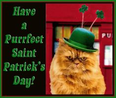 Funny St. Patrick's Day Wallpaper | Have A Purrfect Saint Patrick's Day - Cat humor