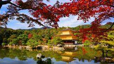 京都 金閣寺 紅葉 Japan,Kyoto,Japan,Kinkaku-ji temple,Golden Pavilion,autumn leaves,colored leaves