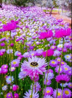 How to Plant Potted Flowers Outdoors in the Soil : Garden Space – Top Soop Flowers Nature, Exotic Flowers, Amazing Flowers, Wild Flowers, Beautiful Flowers, Beautiful Landscapes, Beautiful Gardens, Tres Belle Photo, Spring Blooms