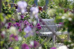 Garten der Aromen - Laquenexy (F) / Gärten in Frankreich / Unsere Gärten / Gärten ohne Grenzen / Startseite - Gärten ohne Grenzen