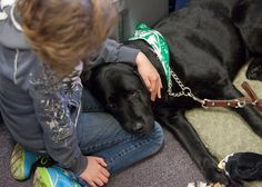 """Dogs in court: See how canine program has changed juvenile cases in West Michigan.Jeannie Wernet talks about her dog Patty who is part of the Canine Advocacy Program. The program is designed to help relieve anxiety in children who have to testify at the Ionia County Courthouse. Amos is an """"amazing"""" dog, Cojanu says. He watches as kids' faces light up when Amos walks into the room. The dog is a kind soul, and he'll sit and patiently wait as a child wraps tiny arms around him and begins to…"""