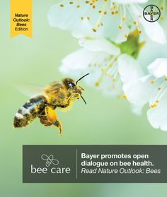 Read @NatureOutlook's edition on #bees to learn about the hottest areas of #bee research #OutlookBees