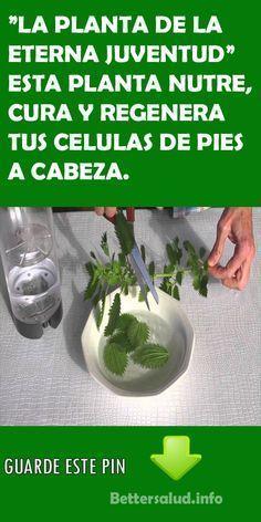 """""""LA PLANTA DE LA ETERNA JUVENTUD"""" ESTA PLANTA NUTRE, CURA Y REGENERA TUS CELULAS DE PIES A CABEZA. #plantas # eterna #juventud #nutre #renegera #celulas #pies #cabeza #salud"""