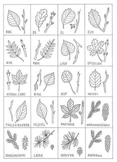 Outdoor Activities For Kids, Learning Activities, Kids Learning, Crochet Bedspread Pattern, Visual Thinking, Plant Identification, Teaching Biology, Autumn Crafts, Forest School