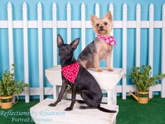 Pet photography by Reflections by Rhiannon Portrait Boutique - Charlotte, NC  #petphotography #petphotographer #petphotographers #pet #pets #petpictures #petphotos #charlotte #charlottepetphotographer #charlottephotographer #reflectionsbyrhiannon