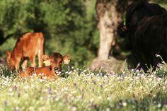 Nuestra ganadería (18)