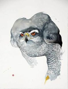Karl Martens Goshawk (Unframed Signed Watercolour on Arches Watercolour paper 35 x 39 in x cms Arches Watercolor Paper, Watercolor Bird, Watercolor Animals, Watercolor Paintings, Karl Martens, Detailed Paintings, Bird Artwork, Ouvrages D'art, Owl Art