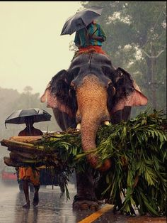 Find images and videos about elephant, india and kerala on We Heart It - the app to get lost in what you love. Image Elephant, Elephant Love, Elephant India, Bull Elephant, Asian Elephant, Kerala India, South India, South Africa, Cochin